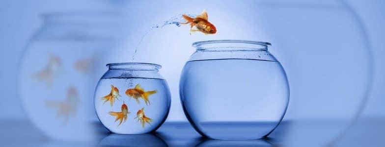 Si tus miedos te dominan, tus sueños mueren - Blog - Edward Rodriguez - Conferencista - Motivador - Coach