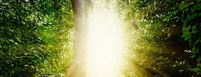 Hay vida antes de la muerte - Blog - Edward Rodriguez - Conferencista - Motivador - Coach